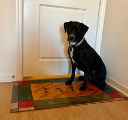 כלב על שטיח