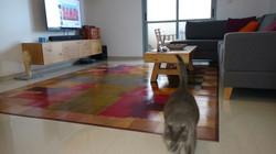 שטיח אבסטראקט ענק וחתול