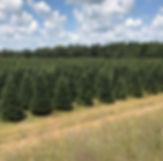 wheelers-christmas-trees-plainfield-wi.j