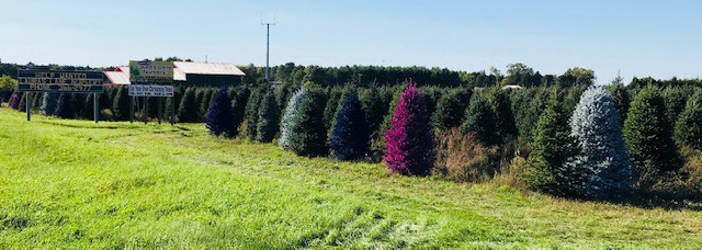 painted-christmas-trees-central-wisconsi