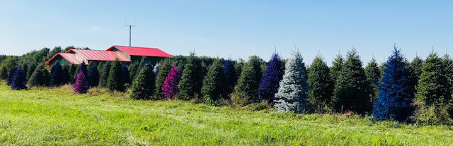 christmas-trees-central-wisconsin.jpg