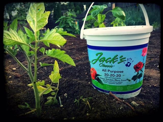 jack's in the garden.jpg