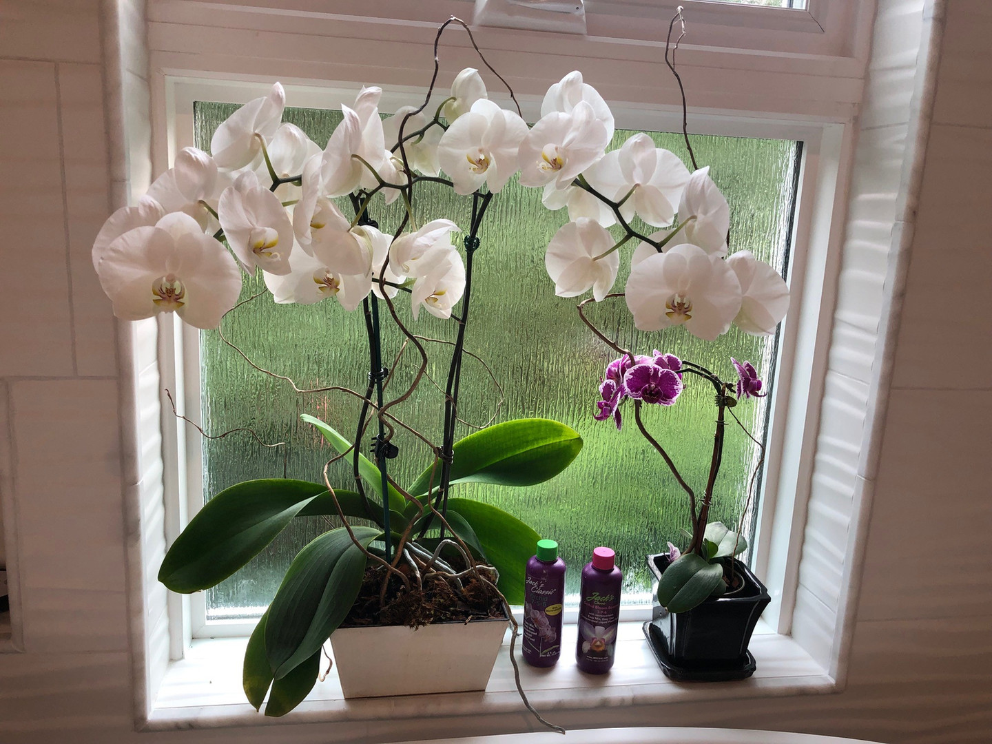 Jack's Orchid_2.jpg