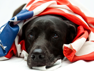 Two War Dog Memorial Stories