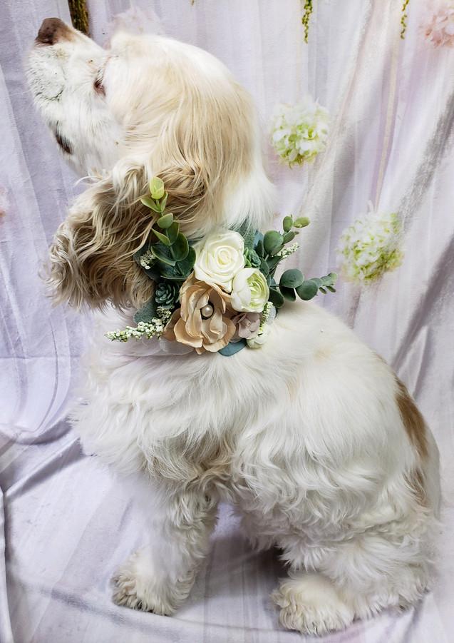 Floral Succulent collar