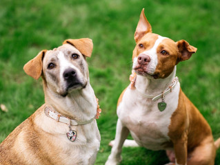 What is the Average Annual Cost of a Dog