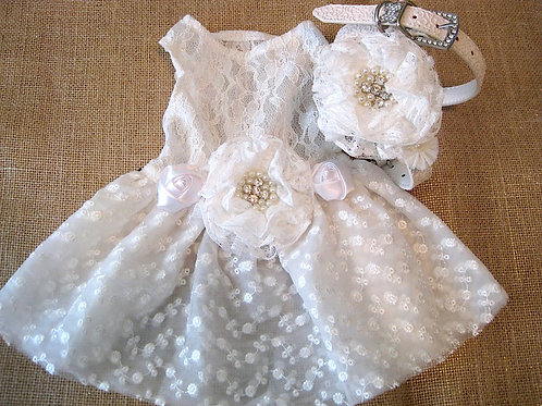 Lovely Lace White Dog Dress