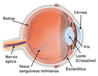 Retina 1