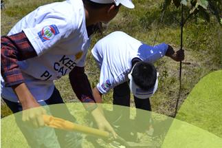 Provident realiza campaña de reforestación por niños con cáncer