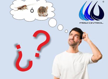 En que se parecen la cucaracha americana y el ratón doméstico?