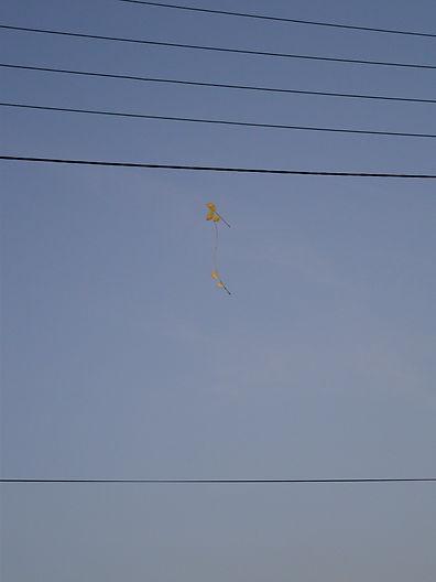 ciel bleu fil électrique feuille en suspension