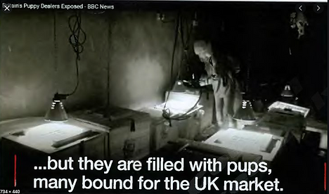 Image from puppy farm in Ireland