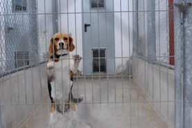BeagleVetSchool_Spain_JMcArthur_2010_961
