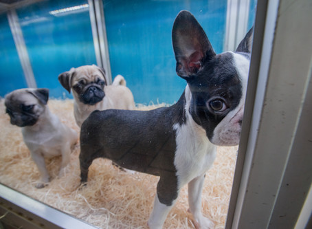 Poo, puppy farms and pandemics