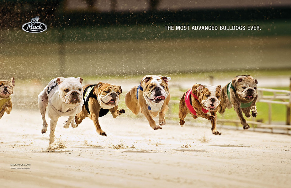 Dog_Race_Brand_Sp.jpg