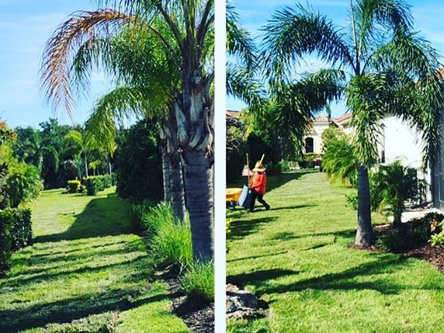 Today's sod installation! #lawncarenut #