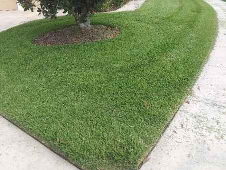 Where's the rain? How to care for your lawn in a drought.