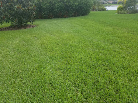 How to Care for your FL Lawn during January