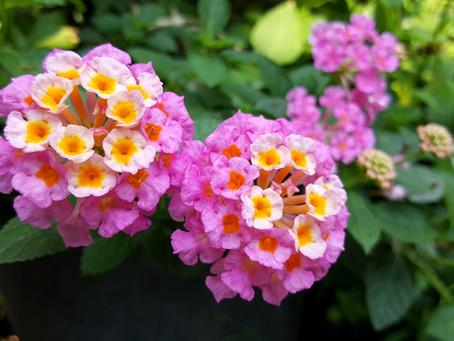 5 Florida Flowering Favorites