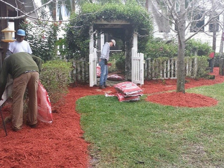 Before you mulch, Do This!