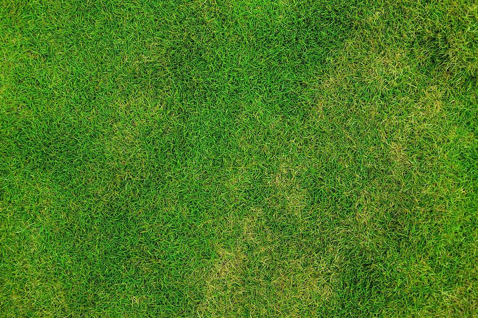 grass-84622_1920 (1).jpg