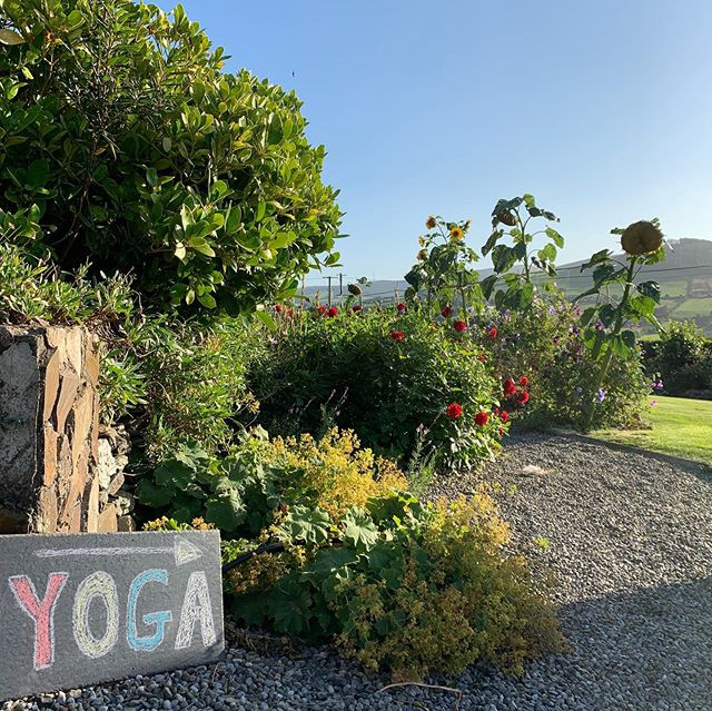 Yoga this way ->