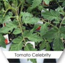 Vegetable Plant Pack
