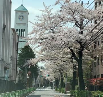 2020 桜