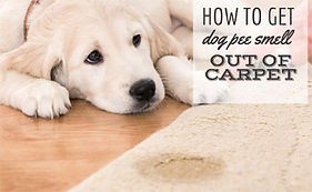 how-to-get-dog-pee-smell-out-of-carpet-j