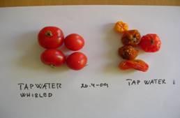 c tomater.jpg