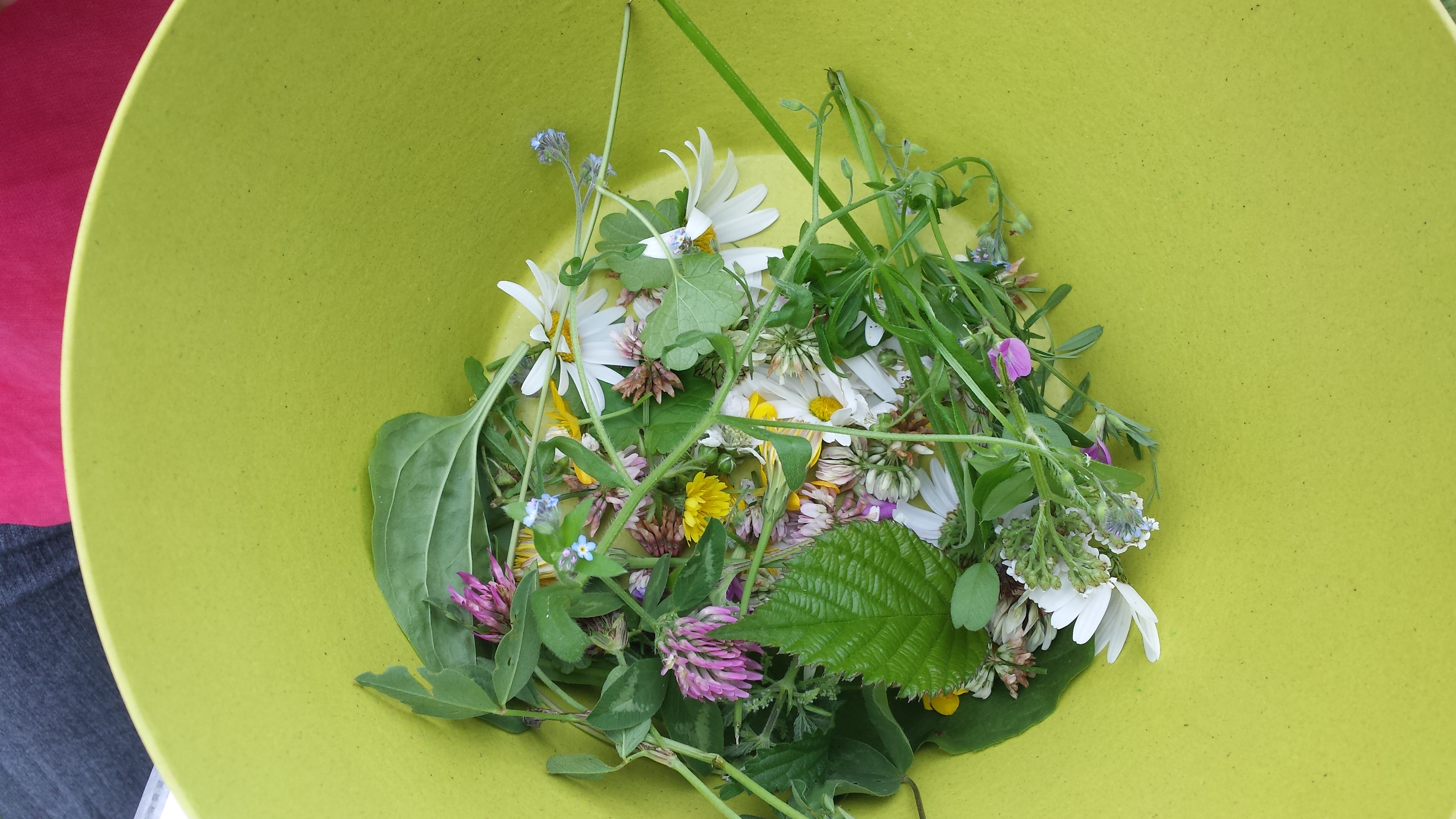 BK eetbare planten buitenkookfeest
