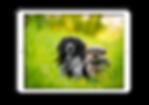 TopFolder - iPad
