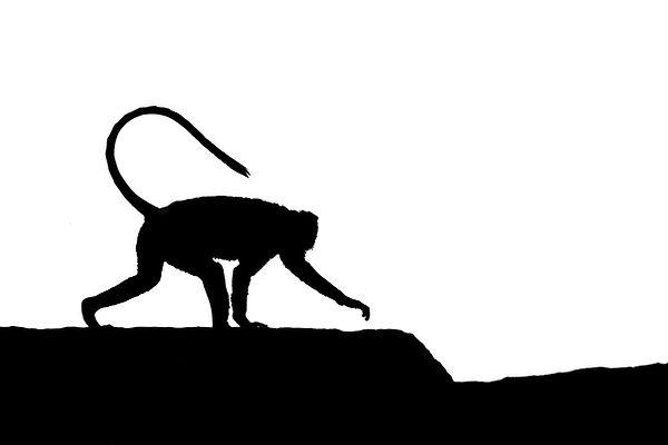 Monkey #2.jpg