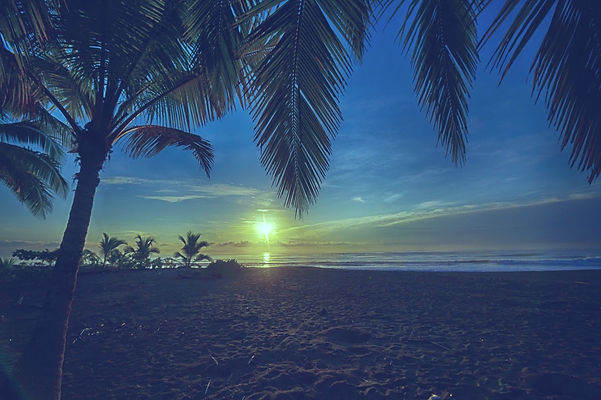 Beach Sunrise with Palm Tree_edited.jpg