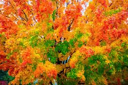 Fall Colors outside Asheville North Carolina