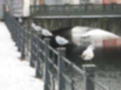 des mouettes alignées sur une rambarde en hiver