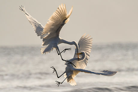chris-sabor_birds-fighting_unsplash.jpg