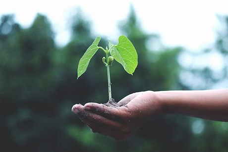 une jeune plante dans la main d'un humain