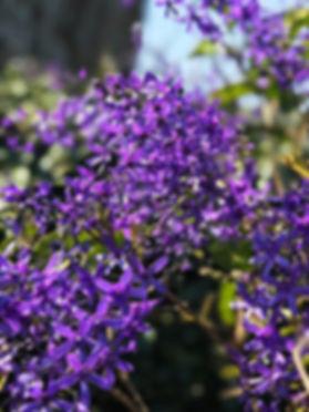 Albiofa Flowers.jpg
