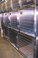 AMC Kennel - small dog cages