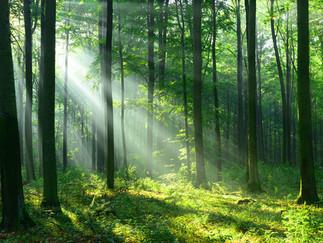 Groupements Forestiers : 3 raisons pour investir