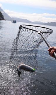 Victory Cove Fishing