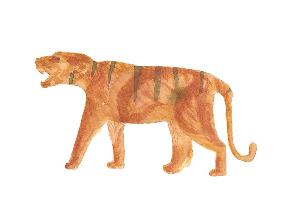 Sketsa harimau dari mainan Atha. Watercolor.