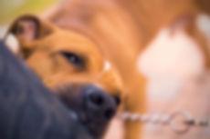dog-bites-768x512.jpg