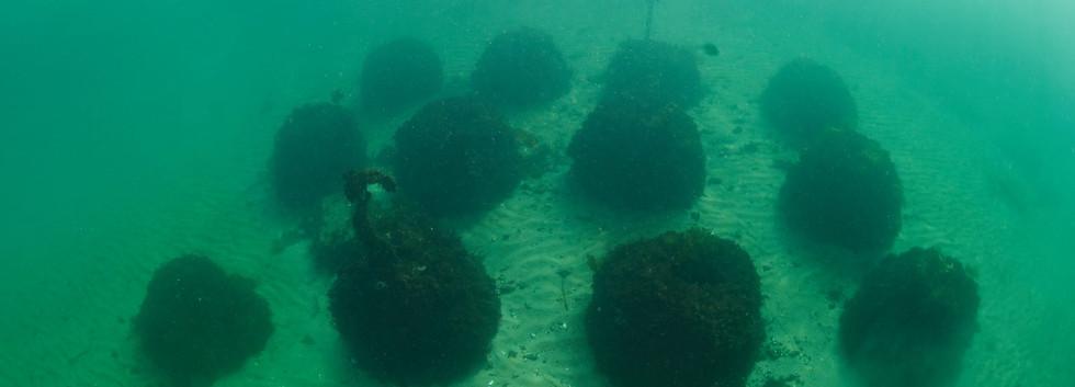 Paddys Head Reef Balls 7.jpg