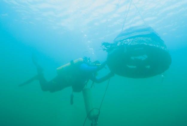 Paddys Head Reef Balls 3.jpg
