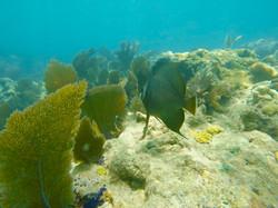 Snorkeling 2