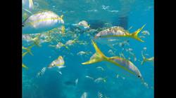 Snorkeling Tour Marine Life