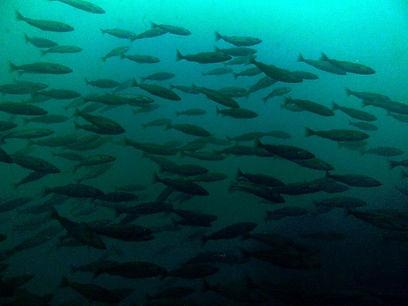West Dover Fish.jpg