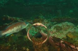 Atlantic Wreck 5